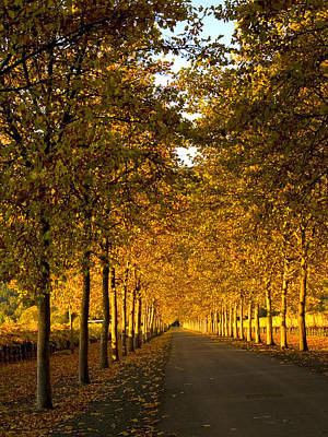 Winery Photograph - Napa Valley Fall by Bill Gallagher