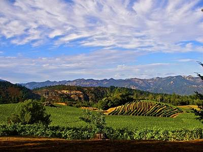 Napa Valley Pride Mountain Vineyard Print by Jennifer Lamanca Kaufman