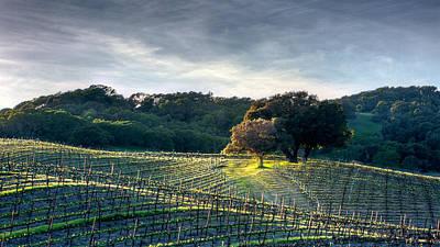 Chris Martin Photograph - Napa Valley Vineyard by Chris Martin