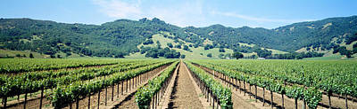 Napa Valley Vineyards Hopland, Ca Print by Panoramic Images