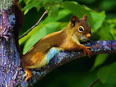 Squirrel Photograph - Nappy Time by Bill Caldwell -        ABeautifulSky Photography