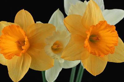 Soft Digital Art - Narcissus 2 by Mark Ashkenazi