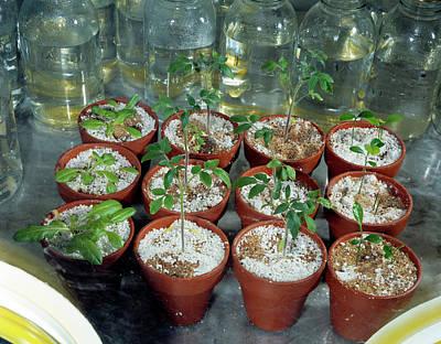 Lyndon Photograph - Nasa Germ Free Plant Research by Nasa