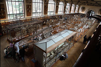 Bone Photograph - National Museum Of Natural History - Paris France - 011314 by DC Photographer