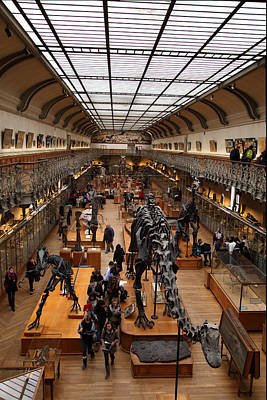 Bone Photograph - National Museum Of Natural History - Paris France - 011326 by DC Photographer