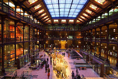 National Museum Of Natural History - Paris France - 011369 Print by DC Photographer