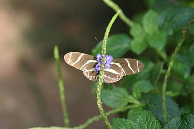 National Zoo - Butterfly - 12122 Print by DC Photographer