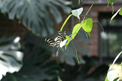 Flies Photograph - National Zoo - Butterfly - 12125 by DC Photographer