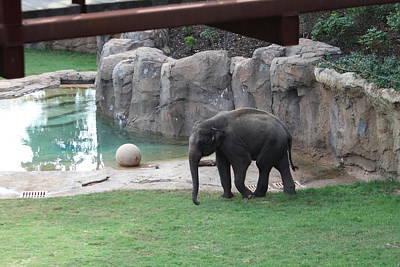Elephants Photograph - National Zoo - Elephant - 011311 by DC Photographer