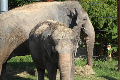 Zoo Photograph - National Zoo - Elephant - 011313 by DC Photographer