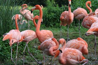 Flamingos Photograph - National Zoo - Flamingo - 12122 by DC Photographer