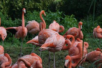 Flamingos Photograph - National Zoo - Flamingo - 12123 by DC Photographer