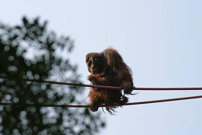 Orangutan Photograph - National Zoo - Orangutan - 121218 by DC Photographer