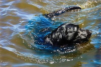 Retrievers Digital Art - Labrador - Dog - Natural Born Swimmer by Barry Jones