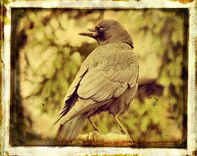 Natural Crow Print by Gothicolors Donna Snyder