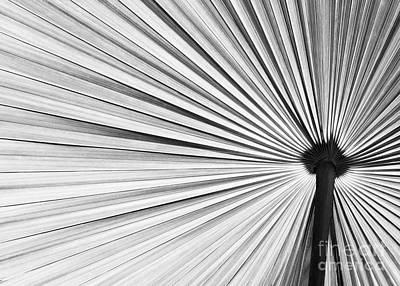 Op Art Photograph - Natural Expolsion by Sabrina L Ryan