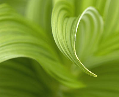 Natural Green Curves Print by Claudio Bacinello