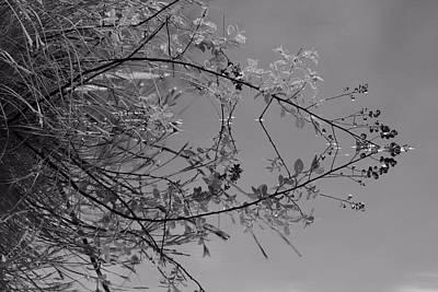 Natural Reflection Print by Karol Livote