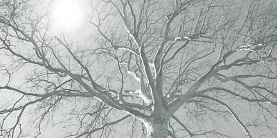nature - art - Winter Sun  Print by Ann Powell