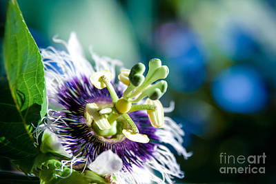 Passiflora Photograph - Nature In Poetry by Sharon Mau