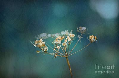 Liz Alderdice Photograph - Nature Is Art by Liz  Alderdice