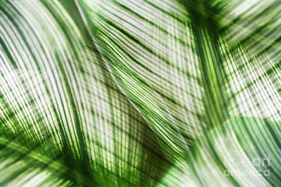 Nature Leaves Abstract In Green Print by Natalie Kinnear