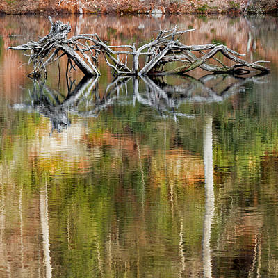 Beaver Photograph - Nature Made Square by Bill Wakeley