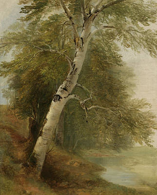 Nature Study Painting - Nature Study   A Birch Tree by Asher Brown Durand