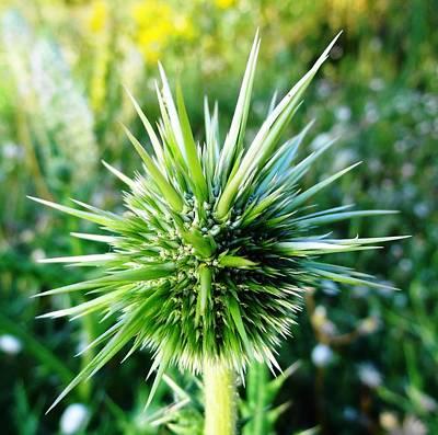Photograph - Nature Up Close 1 by Faouzi Taleb