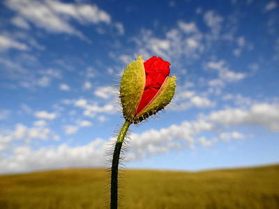 Photograph - Nature Up Close by Faouzi Taleb