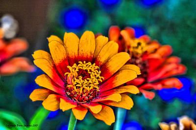 Csu Photograph - Natures Eye Candy by Rebecca Adams