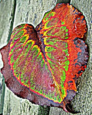 Nature's Glory Print by Barbara McDevitt