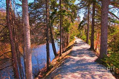 Natures Highway Print by John Malone
