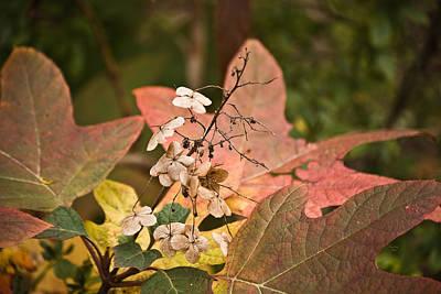 Mixed Media - Nature's Melting Pot by Trish Tritz