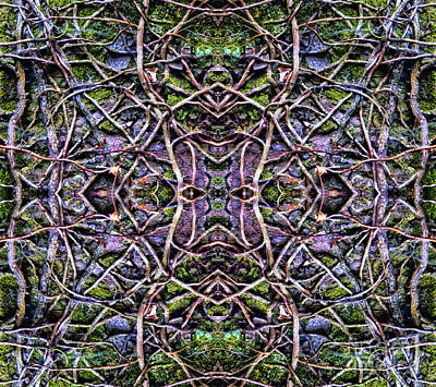 Gillian Digital Art - Natures Patterns by Gillian Singleton