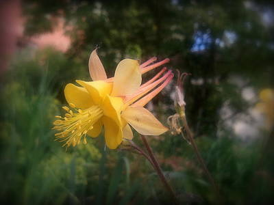 Natures Star Print by Heather L Wright