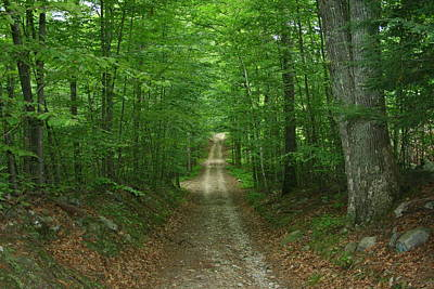 Old Country Roads Photograph - Nature's Way At James L. Goodwin State Forest  by Neal Eslinger