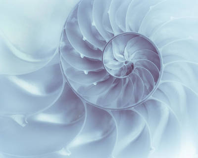 Seashell Photograph - Nautilus - Dreaming Of The Sea by Tom Mc Nemar