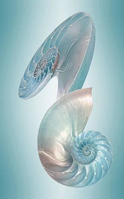 Nautilus Jewel Of The Sea - Vertical Print by Gill Billington