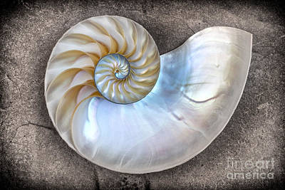 Shell Photograph - Nautilus Shell On A Textured Background by Mimi Ditchie