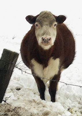 Photograph - Neighbor's Cow by Andrew Govan Dantzler