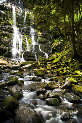 Nelson Falls Tasmania Print by Tim Hester