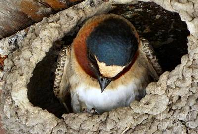 Nest Sweet Nest Original by Audrey Van Tassell