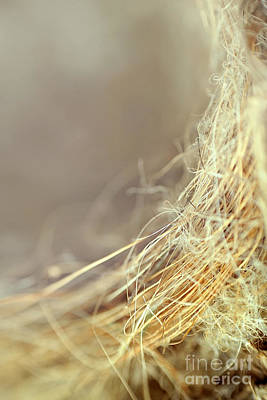 Nest Print by Trish Mistric