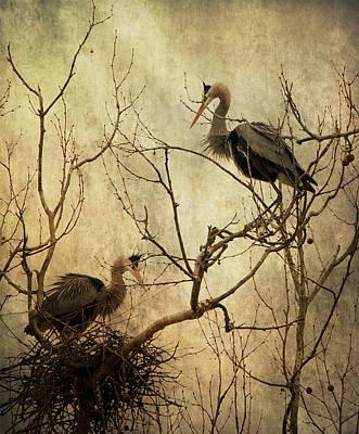 Heron Digital Art - Nesting Blue Herons by Dale Kincaid
