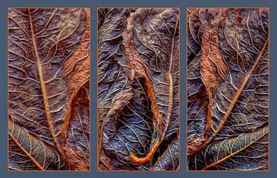 Trio Photograph - Networks by Nikolyn McDonald