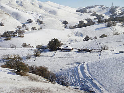 Never Snows In California Print by Donna Blackhall