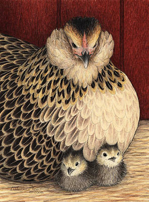 Chicken Drawing - New Arrivals by Katherine Plumer