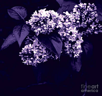 Blooming Digital Art - New Begining  by Jamie Lynn