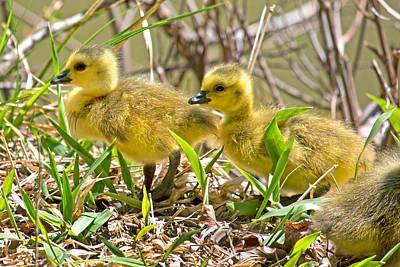 Baby Bird Photograph - New Beginnings by Betsy C Knapp